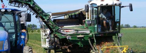 Macchine per raccolta e trapiantatrici